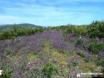 Carcavas de Alpedrete de la Sierra y Meandros del Lozoya;rutas de senderismo;viajes semana santa